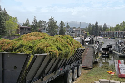 a trailer full of weeds leaving a marina